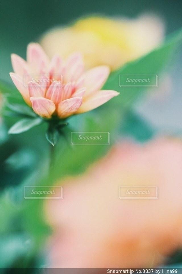 風景の写真・画像素材[3837]