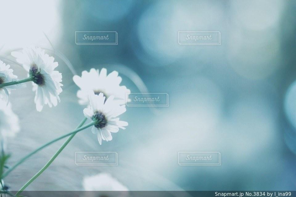 花の写真・画像素材[3834]
