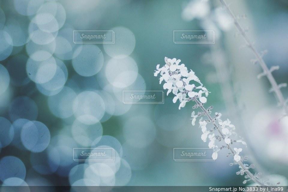 花の写真・画像素材[3833]