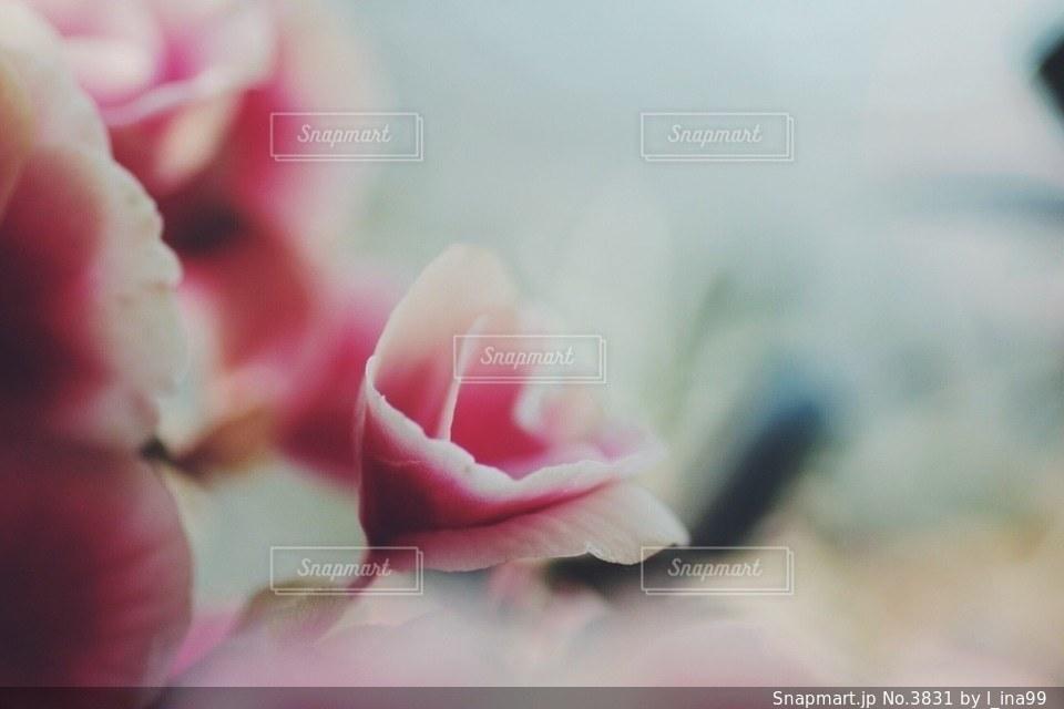 花の写真・画像素材[3831]