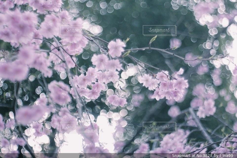 花の写真・画像素材[3828]