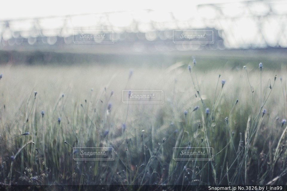 風景の写真・画像素材[3826]