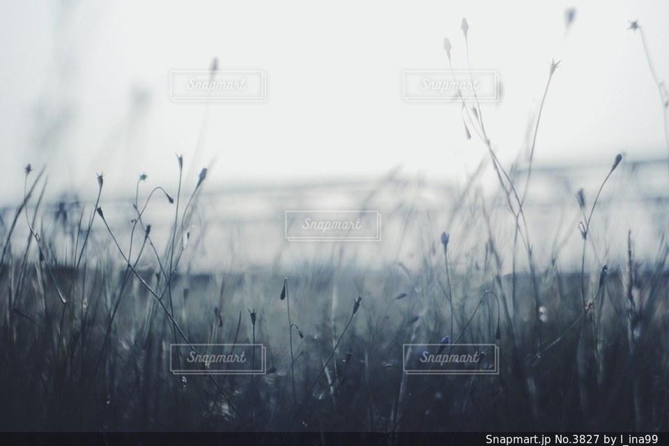 風景の写真・画像素材[3827]