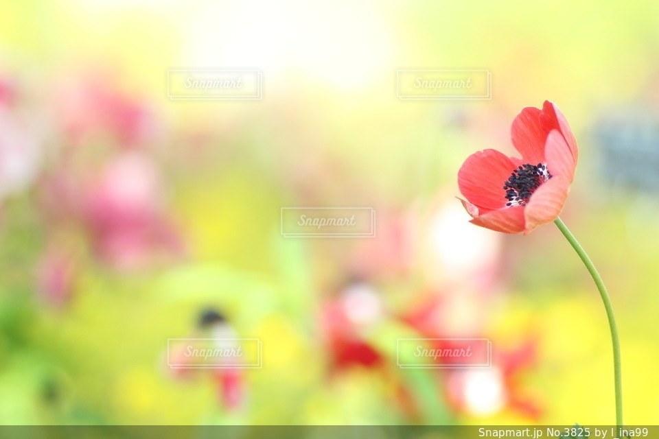 花の写真・画像素材[3825]