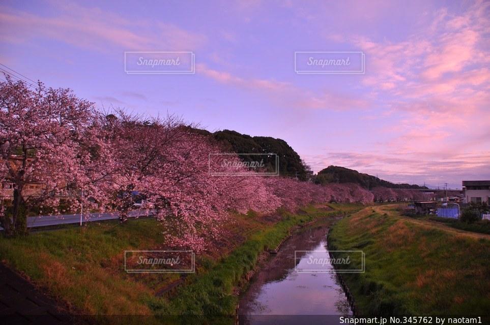 春の写真・画像素材[345762]