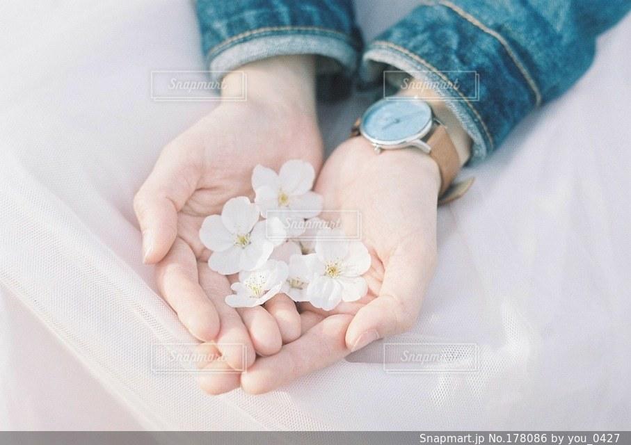 花の写真・画像素材[178086]