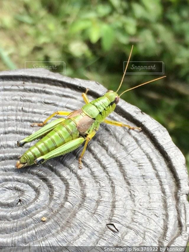 昆虫の写真・画像素材[378922]