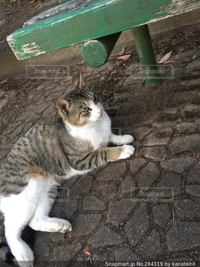 猫の写真・画像素材[284319]