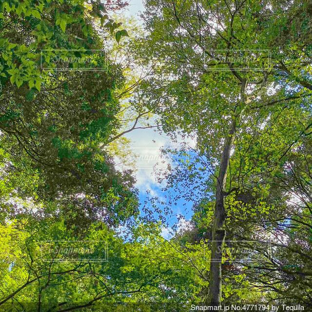 森の中の写真・画像素材[4771794]