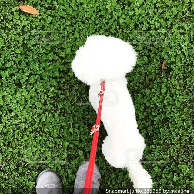 犬の写真・画像素材[285050]