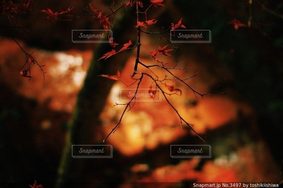 風景の写真・画像素材[3497]