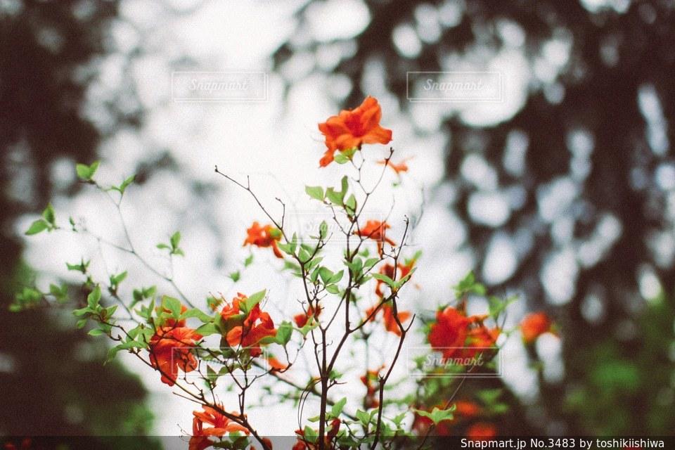 風景の写真・画像素材[3483]