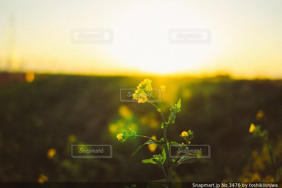 風景の写真・画像素材[3476]