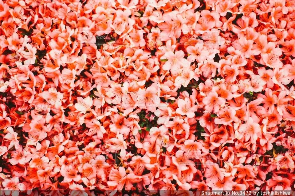 花の写真・画像素材[3472]