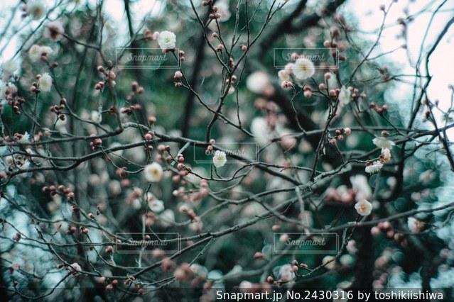 木の枝につるされた鳥の写真・画像素材[2430316]