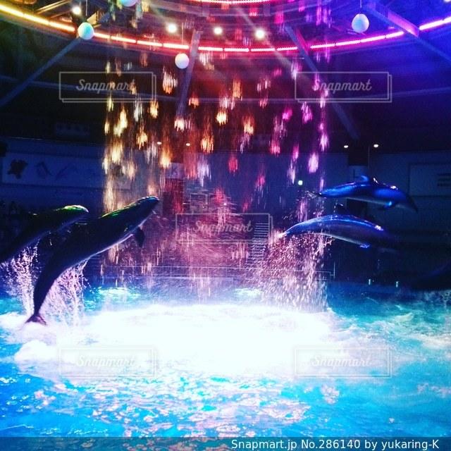 イルカの写真・画像素材[286140]