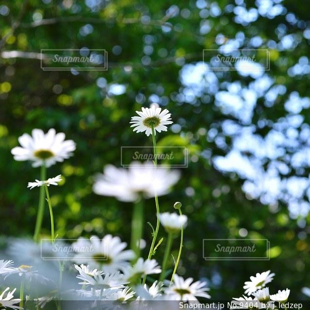 花の写真・画像素材[9404]