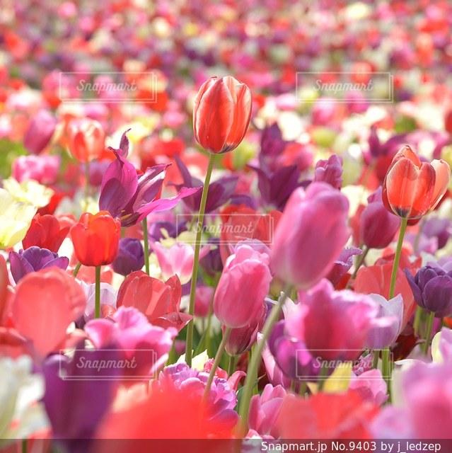 花の写真・画像素材[9403]