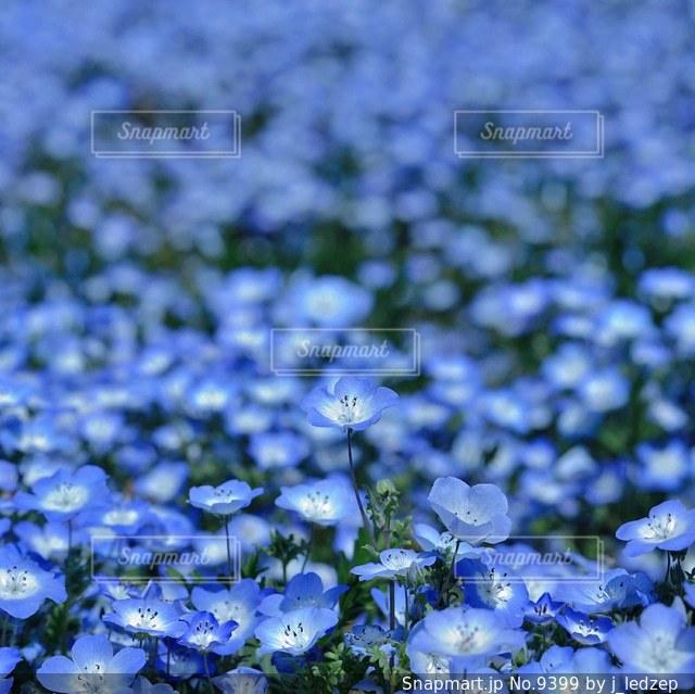 花の写真・画像素材[9399]
