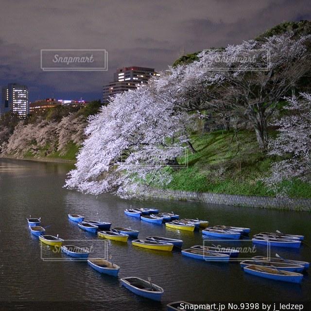 桜の写真・画像素材[9398]