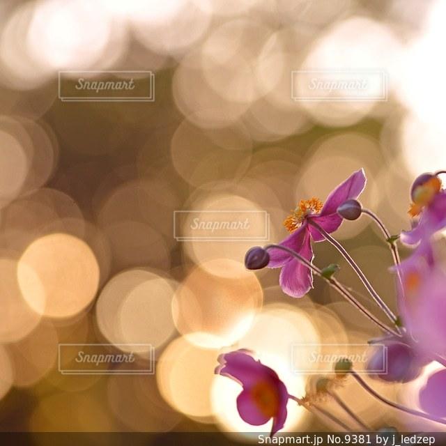 花の写真・画像素材[9381]