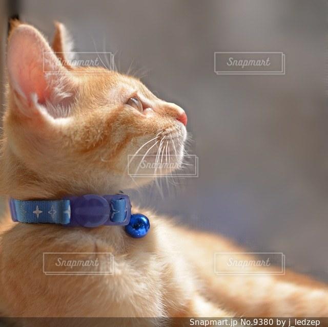 猫の写真・画像素材[9380]