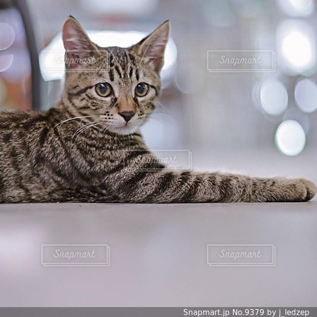 猫の写真・画像素材[9379]