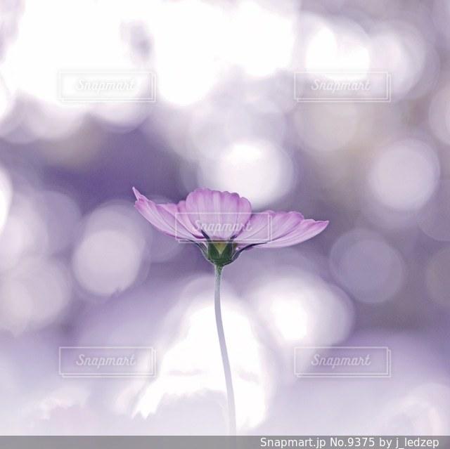 花の写真・画像素材[9375]