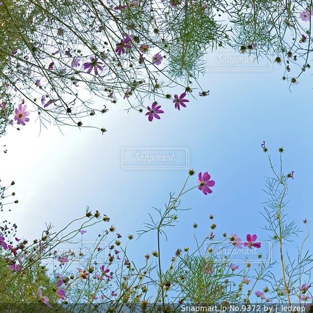 自然の写真・画像素材[9372]