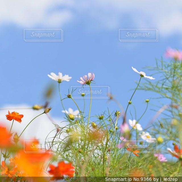 自然の写真・画像素材[9366]