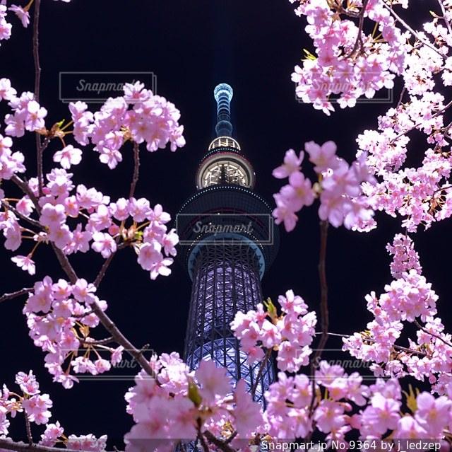 桜の写真・画像素材[9364]