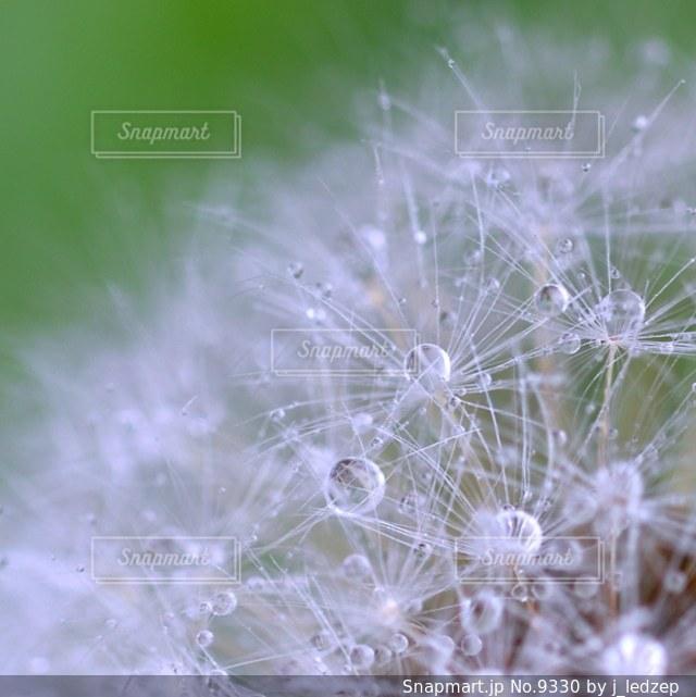 自然の写真・画像素材[9330]