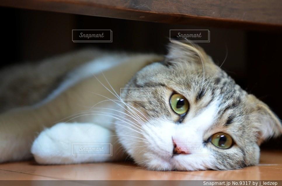 ネコの写真・画像素材[9317]