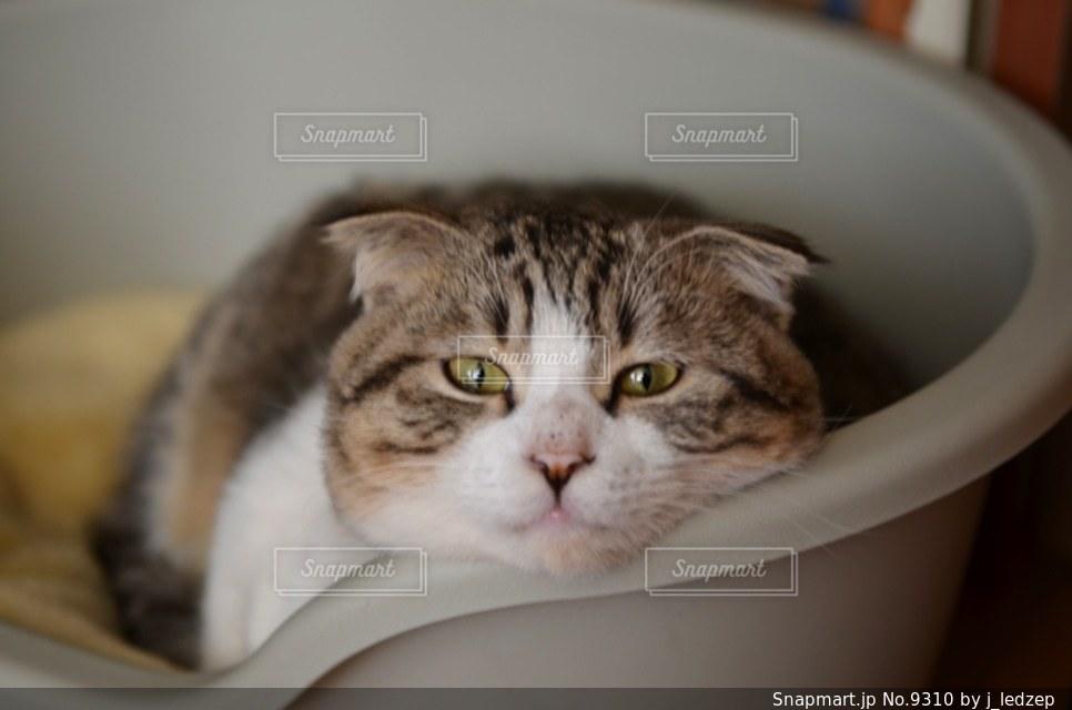 猫の写真・画像素材[9310]