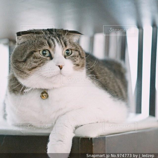 くつろぐ猫の写真・画像素材[974773]