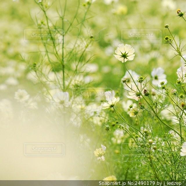 花の写真・画像素材[2490179]