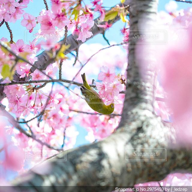 木の枝に止まっている鳥の写真・画像素材[2975453]