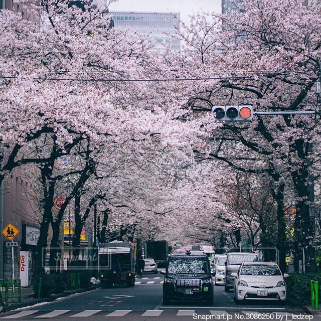 街路の信号の写真・画像素材[3086250]