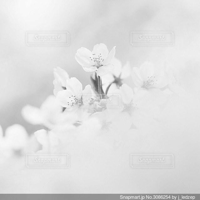 花のクローズアップの写真・画像素材[3086254]