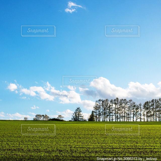 背景に木々のある大きな緑のフィールドの写真・画像素材[3086313]