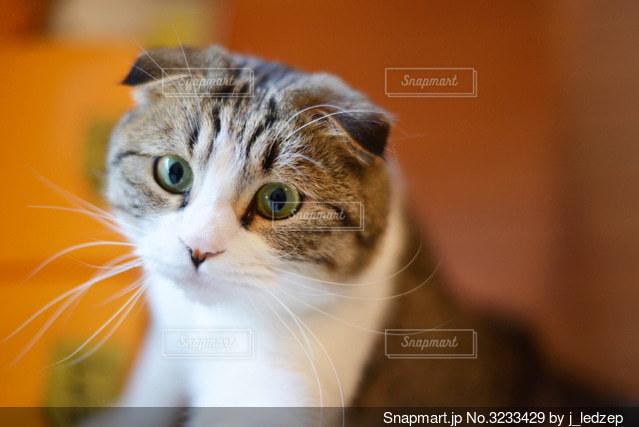 猫の写真・画像素材[3233429]