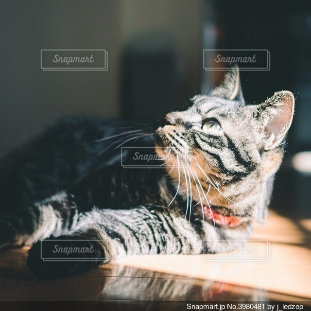 日向ぼっこをするネコの写真・画像素材[3980481]