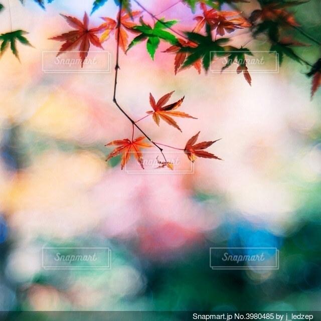 秋の終わりの写真・画像素材[3980485]