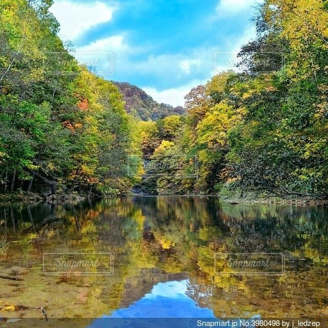水面に映える樹木の写真・画像素材[3980498]