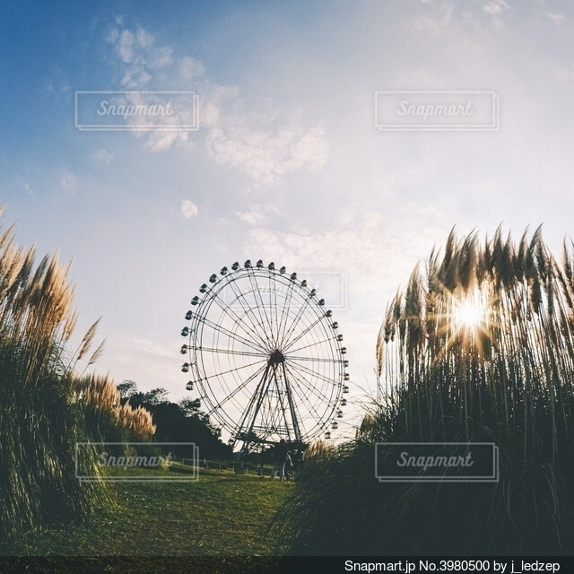 ススキと観覧車の写真・画像素材[3980500]