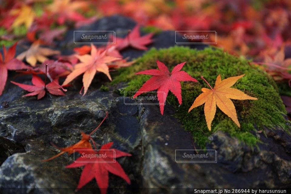秋の写真・画像素材[286944]