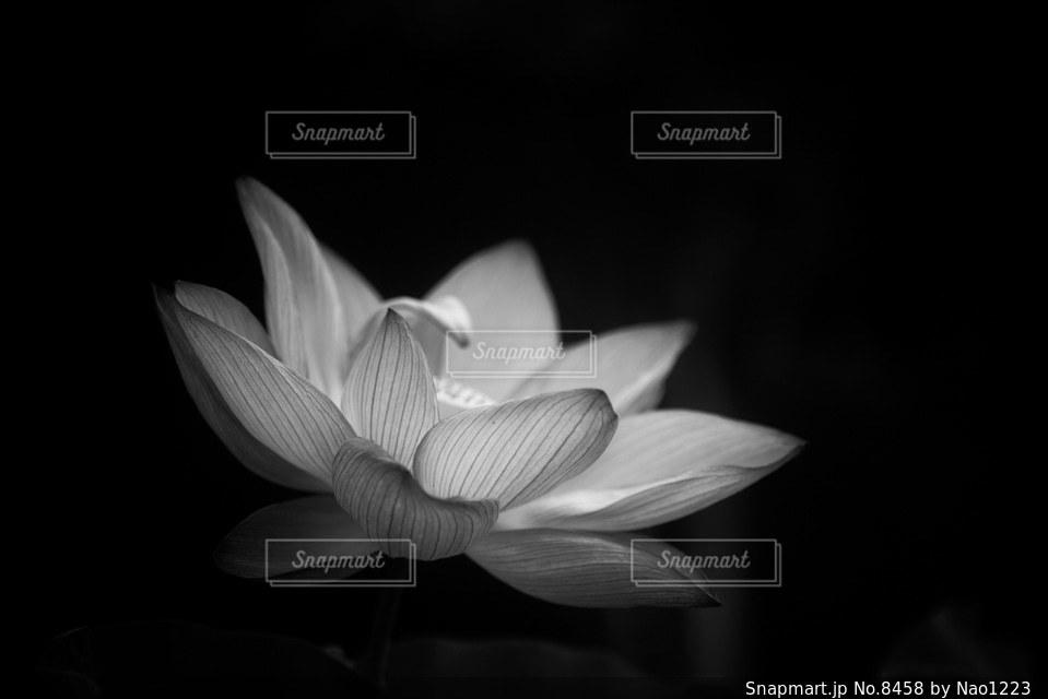 花の写真・画像素材[8458]