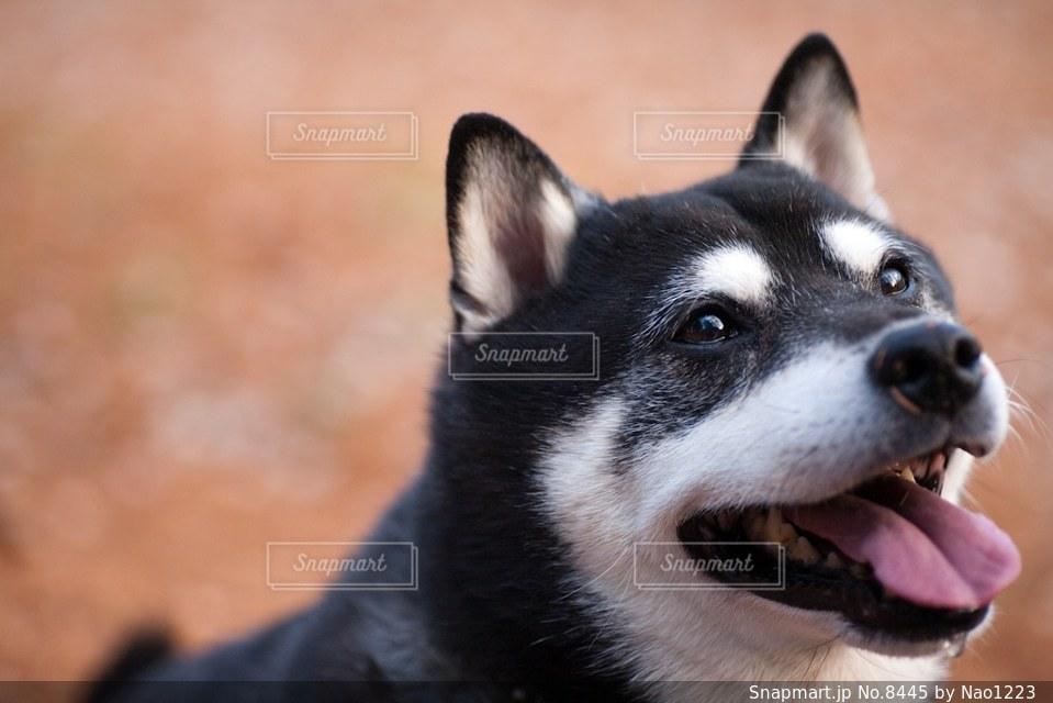 犬 - No.8445