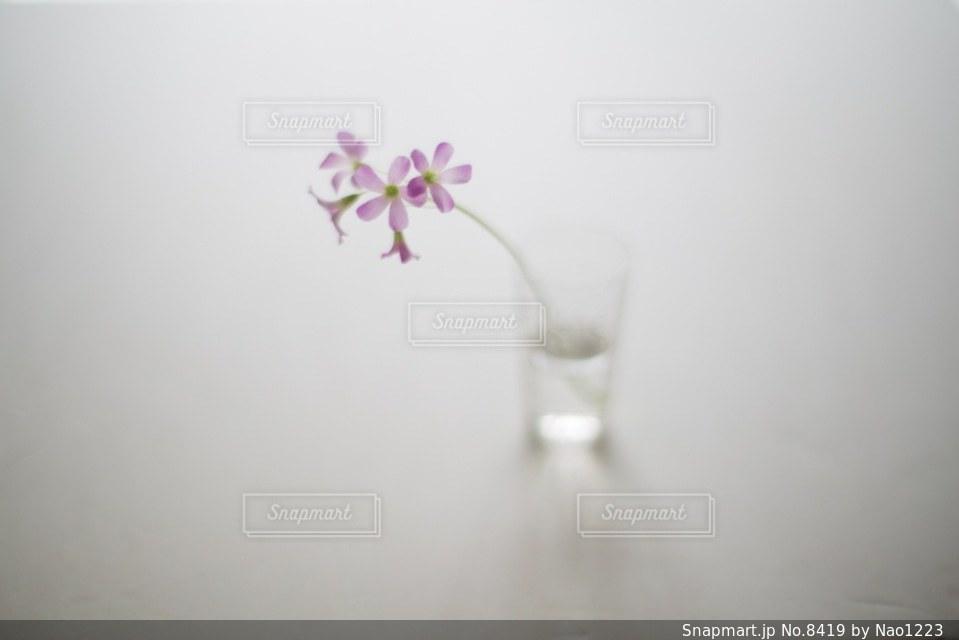 花の写真・画像素材[8419]