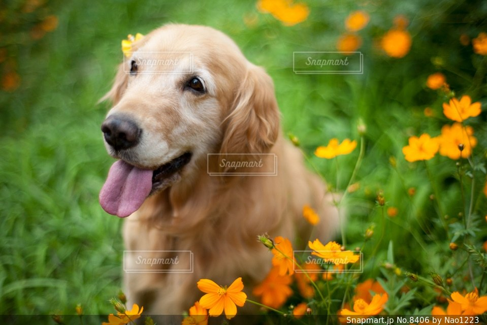犬の写真・画像素材[8406]